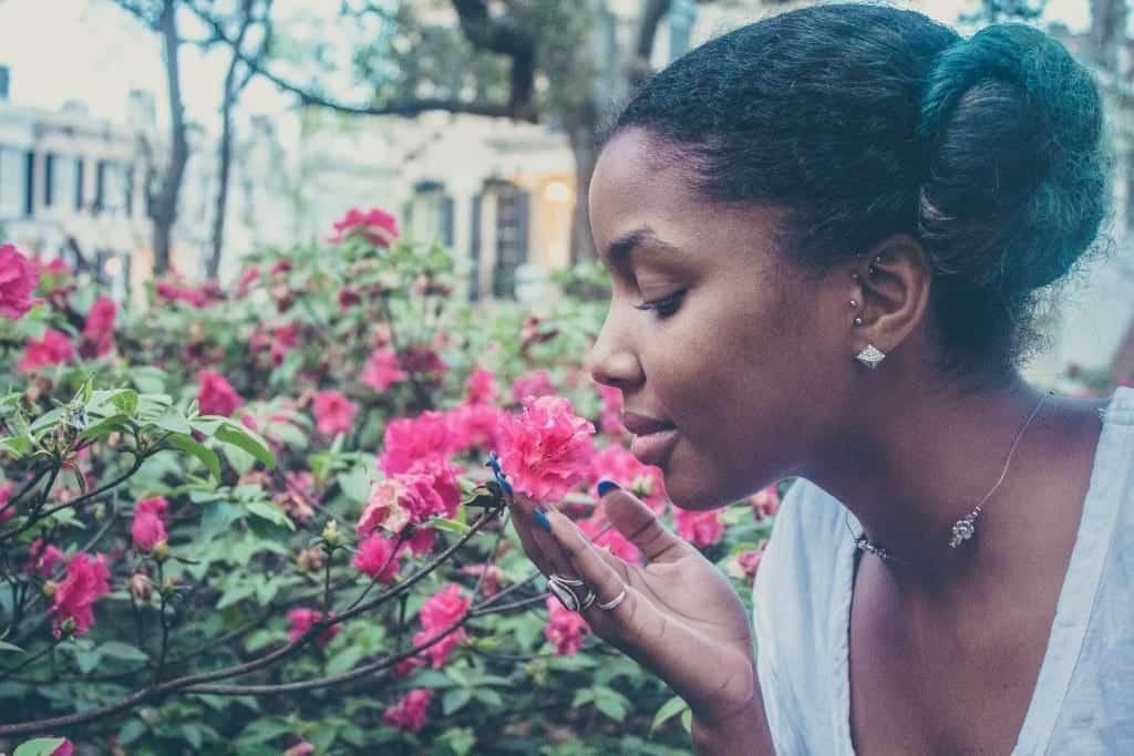 flower-731300_1920